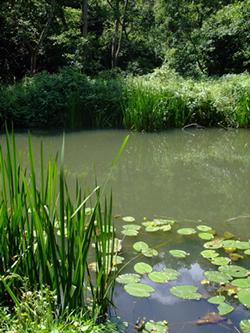 River Wey Godalming