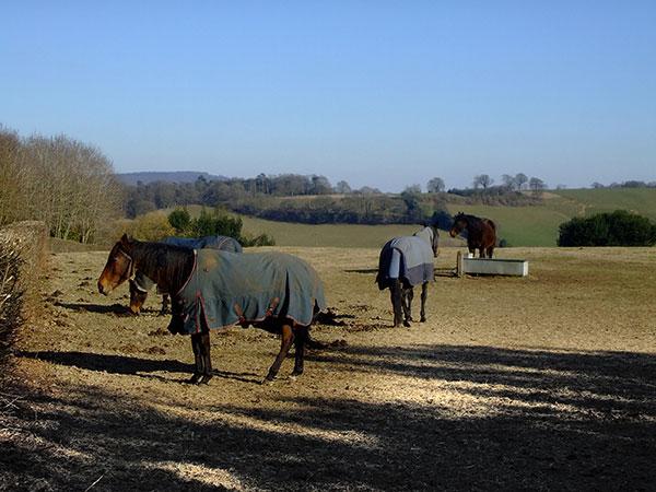Horses in Surrey
