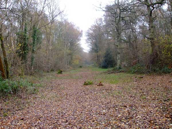 Epsom Common Walk