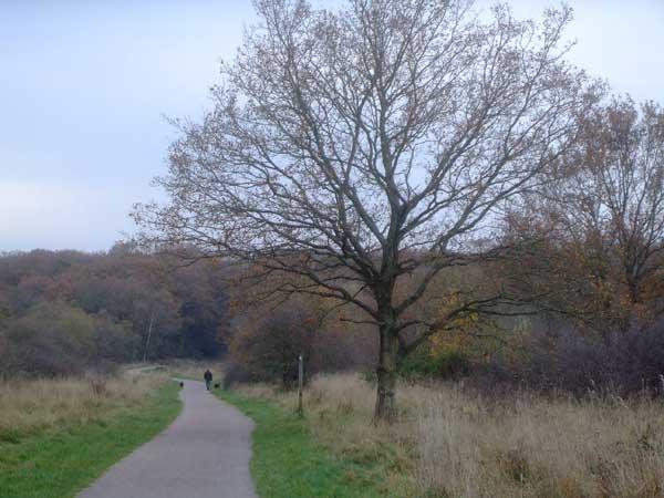 Thames Down Link Walk